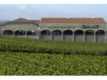 Vineriet på Palmer & Co_Champagnehuset som imponerar med kvalitet för sitt pris