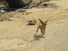 1905-WTG-Odisha-Soforthilfe-junger-Hund