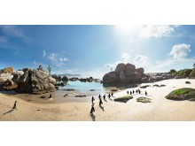 Panoramic view of penguins on Boulders Beach in Cape Town