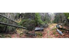 Vindfälle på Blekingeledens östliga sträckning från Ronneby stad har kapats upp inne i ett Biotopskyddsområde. Stockarna lämnas kvar och bidrar till den biologiska mångfalden.