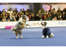Askhunden på MyDOG 2014
