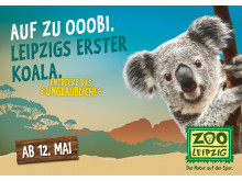 Koala Plakatkampagne mit Oobi-Ooobi