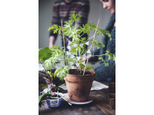 Pynta din växtbytardag!
