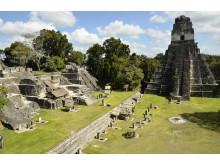 Fantastiske Tikal i Guatemala