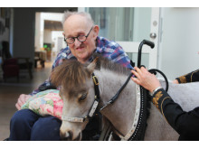 Kvalitet for de ældre borgere kan også være at være i nærheden af dyr