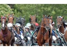 Hästnäringen i Sverige skapar 38 000 jobb.