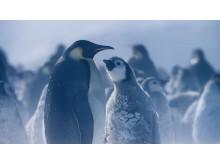 Hostile Planet-luontodokumenttisarjan Napaseutu-kuvauksesta, National Geographic