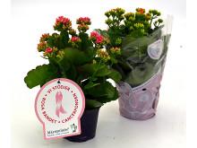 Dagens Rosa Produkt 17 oktober - en Höstglöd från Mäster Grön