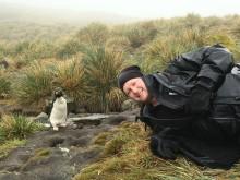 C-Tiller_pingvin