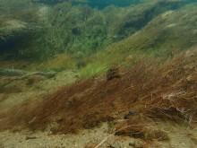Undervannsvegetasjon