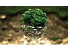environmental-protection-683437__340