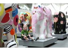 Elephant Parade to visit Cardiff for the first time
