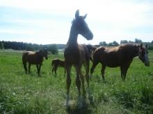 Framtidens hästar