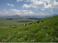 Walking In South Africa: On The Zulu Trail
