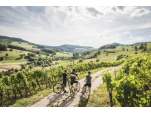 Bikergruppe in den Rebbergen von Oberflachs, Aargau