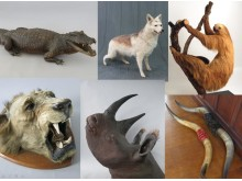 taxidermy burglary 2