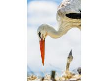 Storkprojektet