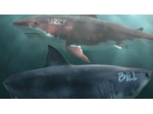 """3D images of sharks """"Bill"""" (Gates) and """"Larry"""" (Ellison)"""