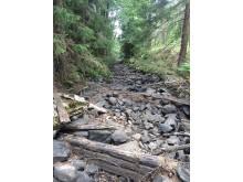 Uttorkat vattendrag 2