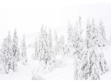 Med det nya snöläggningssystemet kan vi mer än halvera tiden att lägga snö