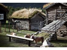 Norwegische Familienbetriebe stellen sich auf der Anuga vor .