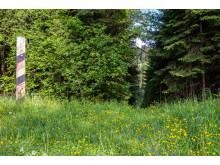 Grünes Band - Naturpark Thüringer Schiefergebirge/ Obere Saale