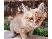 WTG-Syrien-Katze-2
