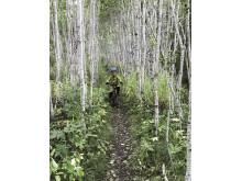 Cykling i björkskogen