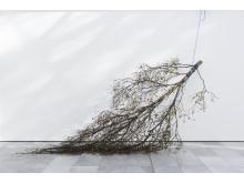 Mattias Härenstam, Lorck Schive Kunstpris 2017. Photo: TKM/ Susann Jamtøy