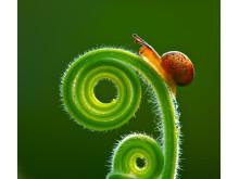 E Zhang - 55544-25470 - 音符上的蜗牛