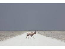 Maroesjka Lavigne, Belgium, Shortlist, Professional, Landscape, SWPA 2016_2