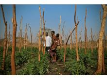 Odling, världens tuffaste jobb