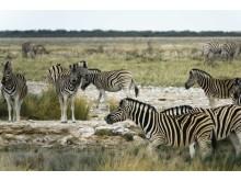 CS-281116-namibia_rx10-085