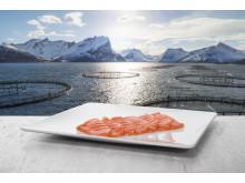 Produktbilde norsk laks