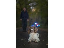 Årets polishund 2018 - Ben