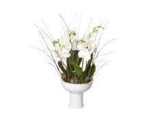 Jul på Interflora: orkidéplanteringen Bergsskål