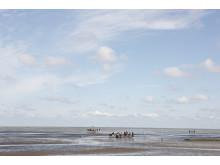 Vintervandring ved Vadehavet