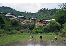 The village of Maeramit, Omgoi, Chiangmai