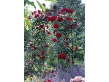 Classic Garden Elements ROSENBOGEN KIFTSGATE 01 (2)