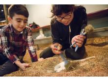 Gräv efter fossil i utställningen Fossil och evolution