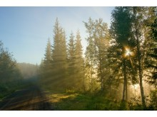 Skogsbilveg Foto: Steinar Johansen