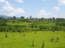 Traditionellt jordbrukslandskap i sydvästra Etiopien med betesmark, små odlingsfält, hemträdgårdar och skog.