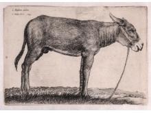 Wenceslaus Hollar efter Jacopo Bassano, Åsna, 1649