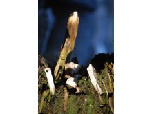 Ved Kangeq nær Nuuk, stikker træ og knogler ud af en mødding