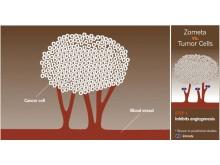 Zometas skyddande egenskaper, grafik 1