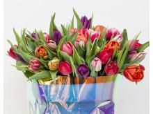 Det är trendigt med färgglada tulpaner 2019