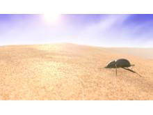 En skalbagge i öknen, förebild för ny teknologi.