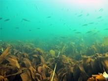 Tareskog og fiskestim
