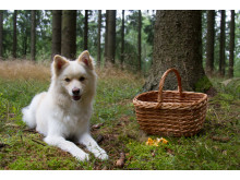Hund i svampskogen
