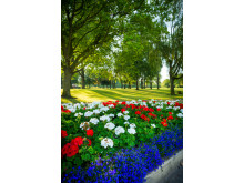 FLOWER POWER: Beautiful flowerbeds at Truffet Park in Langley